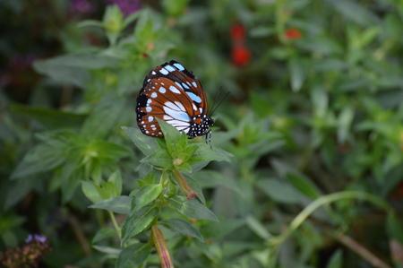 Butterfly Banco de Imagens - 108212113