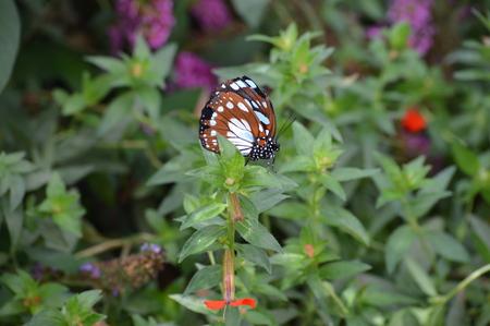Butterfly Archivio Fotografico - 108212115