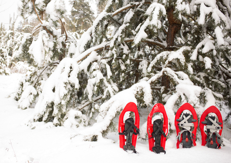 snowshoes: Snowshoes in the forest. Stock Photo