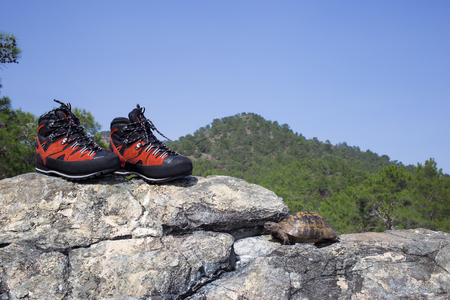 demanding: Climbing shoes for demanding hikes on the rock with a turtle.