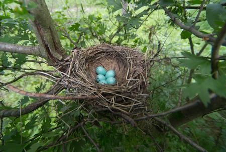 nido de pajaros: nido de ave en su h�bitat natural.