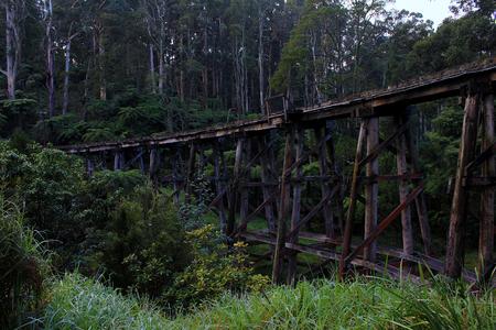 bushwalk: Trestle bridge