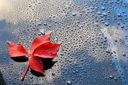 Water drops on car paint with red leaf Stock Photo