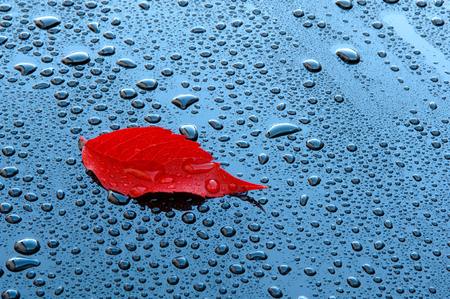 fall protection: Water drops on car paint with red leaf - Waterdrops on a polished black lacquer surface - red leaf - blue sky - white clouds