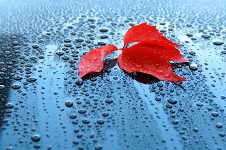 mirror on the water: Water drops on car paint with red leaf - Waterdrops on a polished black lacquer surface - red leaf - blue sky - white clouds