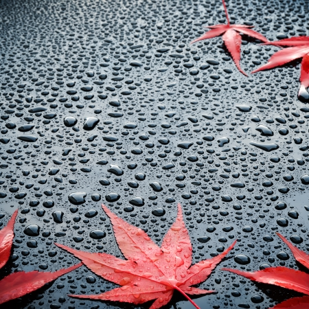 Water drops on polished black car paint with red leafs photo