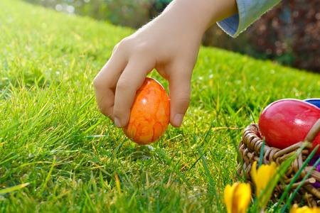 easter morning: Easter egg hunt on a sunny Easter morning