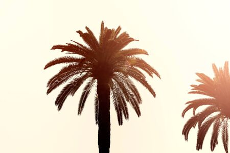Perfect Palm Trees in Sunlight photo