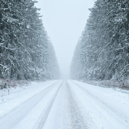 snow forest: Winter Driving - country road in winter - Snowfall