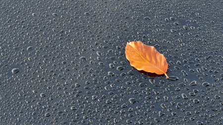 leaf water: Water Drops on Polished Black Car Paint with autumn leaf