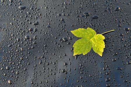 Waterdruppels op zwart gepolijst Auto verf met blad Stockfoto