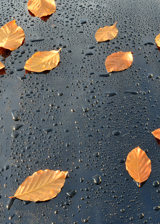 car polish: Water Drops on Polished Black Car Paint with leafs Stock Photo