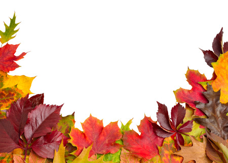 Autumn Leaves Border on White - clipping path