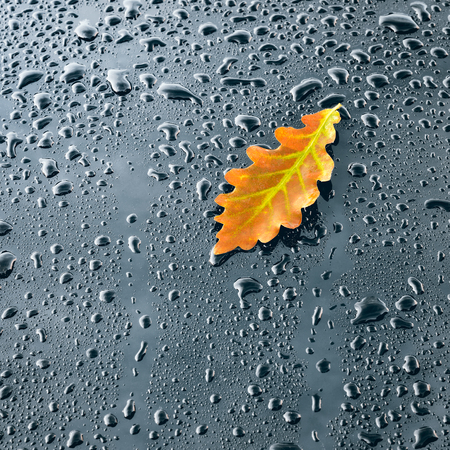 Water Drops on Polished Car paint with Leaf Stok Fotoğraf
