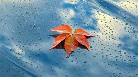 A beautiful autumn leaf lying on the polished bonnet of a clean car Stok Fotoğraf