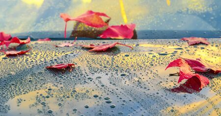 Beautiful autumn leaves lying on the bonnet of a clean, wet car - shallow depth of field Stok Fotoğraf