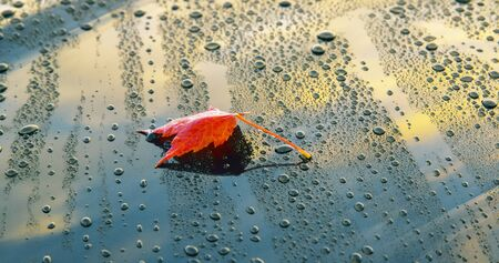 A beautiful autumn leaf lying on the polished bonnet of a clean car Фото со стока
