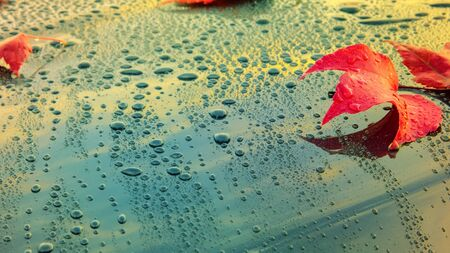 Beautiful autumn leaves lying on the bonnet of a clean, wet car - shallow depth of field Фото со стока