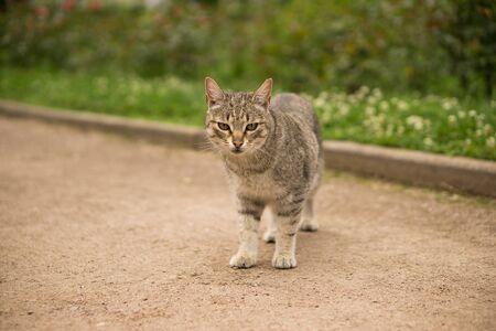 gray cat: gray cat on the street Stock Photo