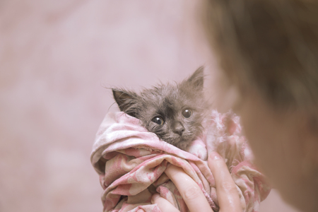 soggy: Cute soggy kitten after a bath in pink towel