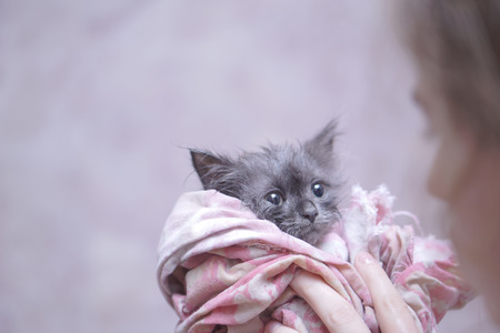 Cute soggy kitten after a bath in pink towel
