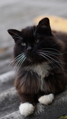 black cat with white whiskers Stock Photo