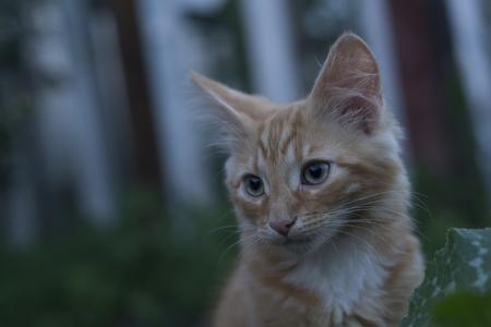 beautiful ginger kitten on green grass Stock Photo