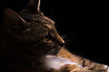 Close-up portrait of funny Cat with curious face on isolated black background Stock Photo
