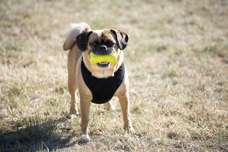 dog with squeeze toy Stock Photo