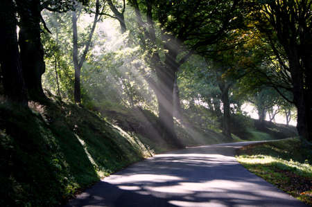 shafts: Shafts of sunlight through trees Stock Photo