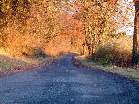 hedgerow: Woodland Road Stock Photo