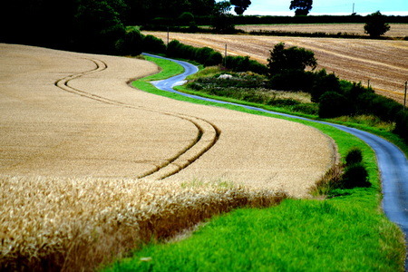 grass verge: Corn Field and Road