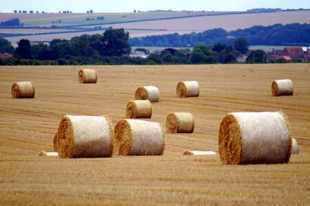 bales: Field With Straw Bales
