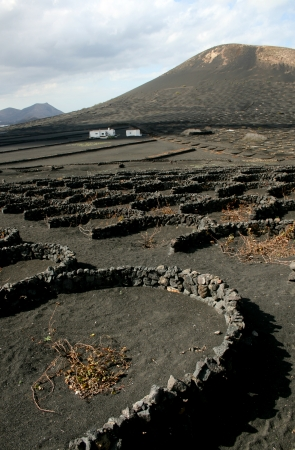 timanfaya: Paredes de piedra redondas Halfmoon utilizados para la viticultura, el Parque Nacional de Timanfaya, Lanzerote, Espa�a