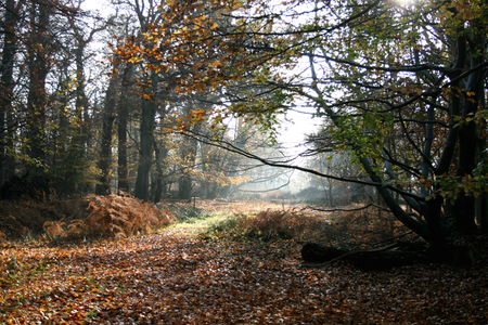 Autumn time along the Woodland Trail, RSPB Minsmere nature reserve, Saxmundham, Suffolk, England photo