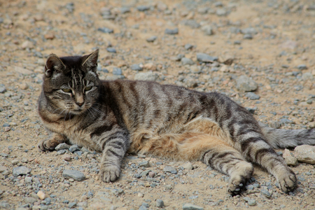 sark: A resident cat on Sark in the Channel Islands