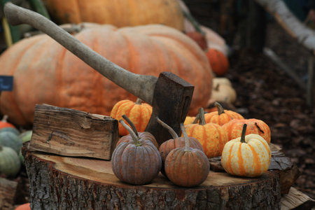 hyde: Pumpkins with axe on tree stump at RHS Hyde Hall, Essex, England