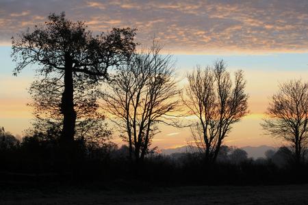 winter sunrise: Winter sunrise with bare trees, Gosfield, Braintree, Essex, England Stock Photo