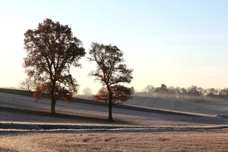 essex: Frosty winter morning with field and trees, Wethersfield, Essex Stock Photo