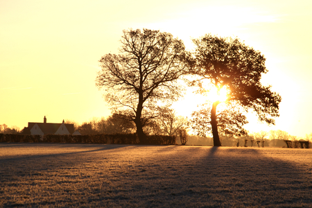 Frosty winter morning with field and trees, Gosfield, Essex
