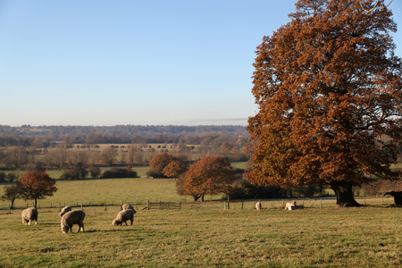 towards: View of Stour Valley on a frosty winter morning, from East Bergholt towards Dedham, Essex Stock Photo