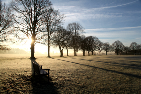 Park bench with line of trees on a frosty winter morning, Shalford, Essex