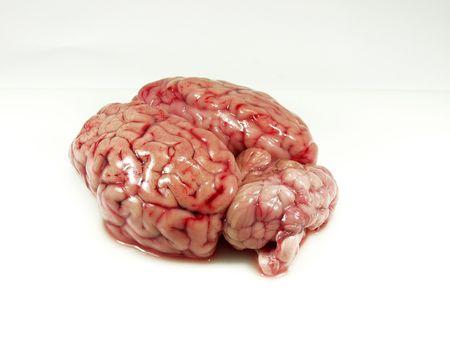 Cerebro de bovino cerca  Foto de archivo - 469591