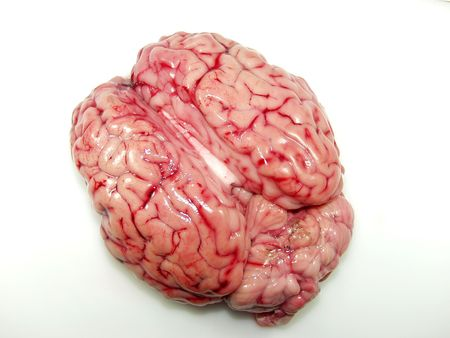 flesh surgery: Bovine brain close up