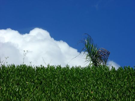 palm leaf and grass against clouds and blue sky