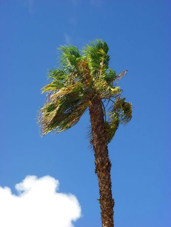 palm tree on blue sky background Stock Photo - 539406