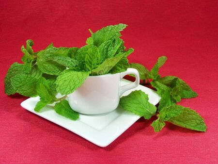 robustness: a cup of green leaves of mint on red background