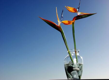 botanica: two birds of paradise on vase with stones
