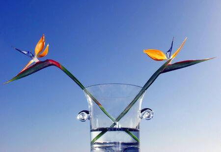 two birds of paradise on vase agaisnt blue sky photo