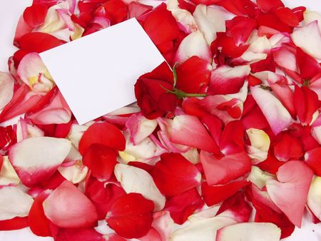 rose and blank card for valentine on petal photo